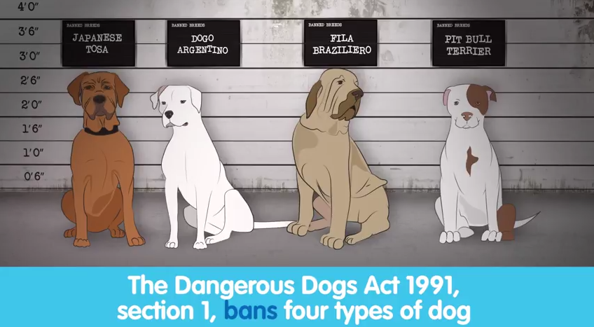 Dangerous Dog Act Uk