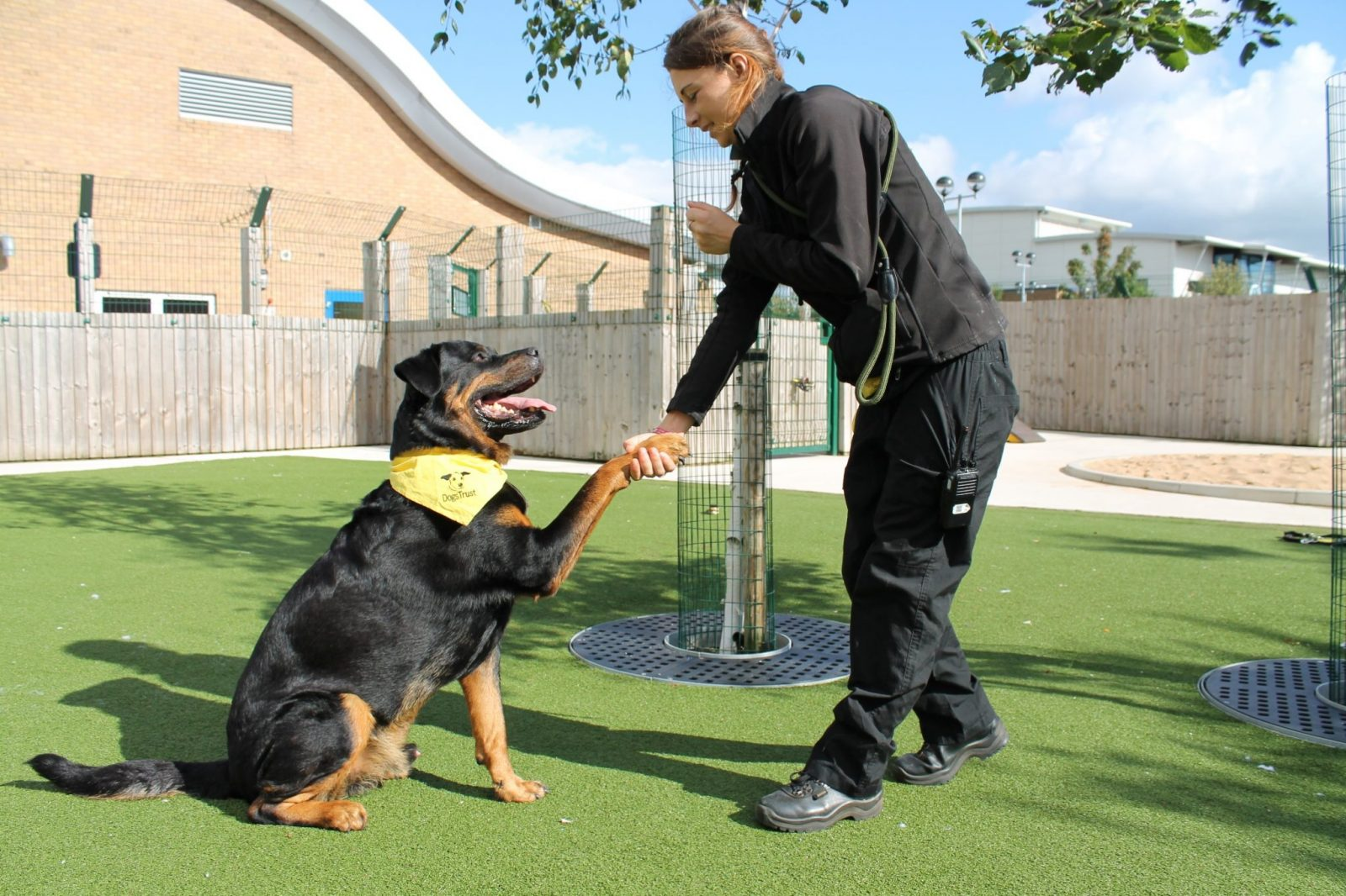 Credit: Dogs Trust Manchester Daz with Canine Carer Erin Williams