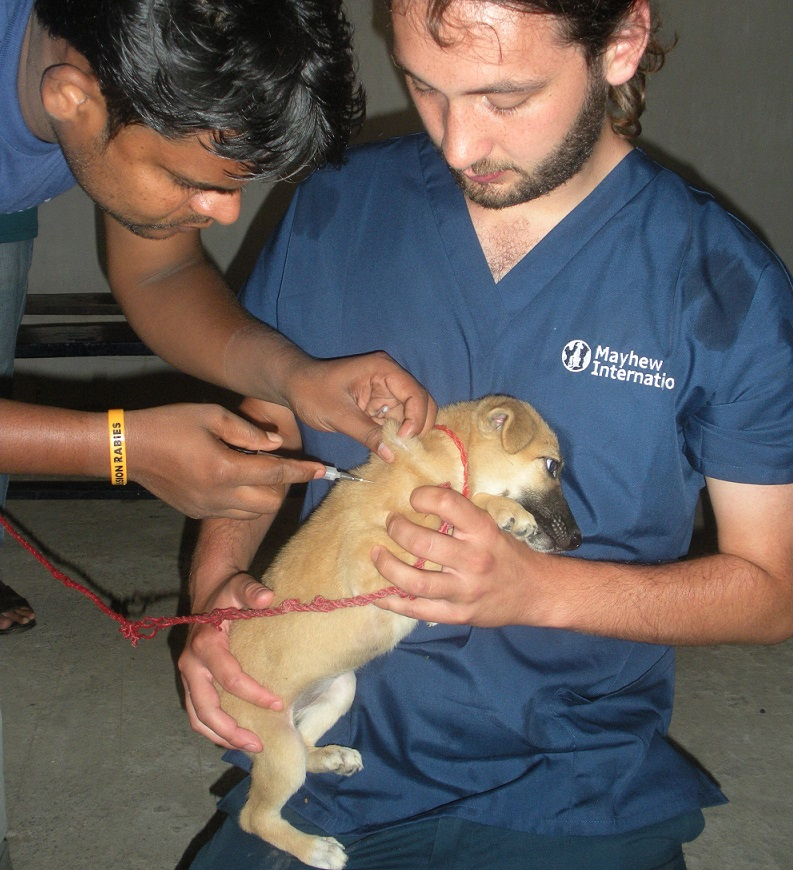 helping-mission-rabies