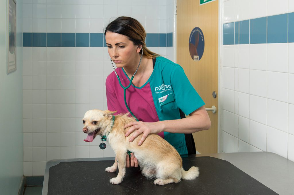 Pictured for PDSA at Lorne Street pet aid hospital in Bradford is Prince the Chihuahua and Head Nurse Miriam Wilson. Prince suffered a torn trachea while out playing one day, he was at death's door but was saved by PDSA Vets and made a full recovery. Pictures copyright Darren Casey / DCimaging 07989 984643