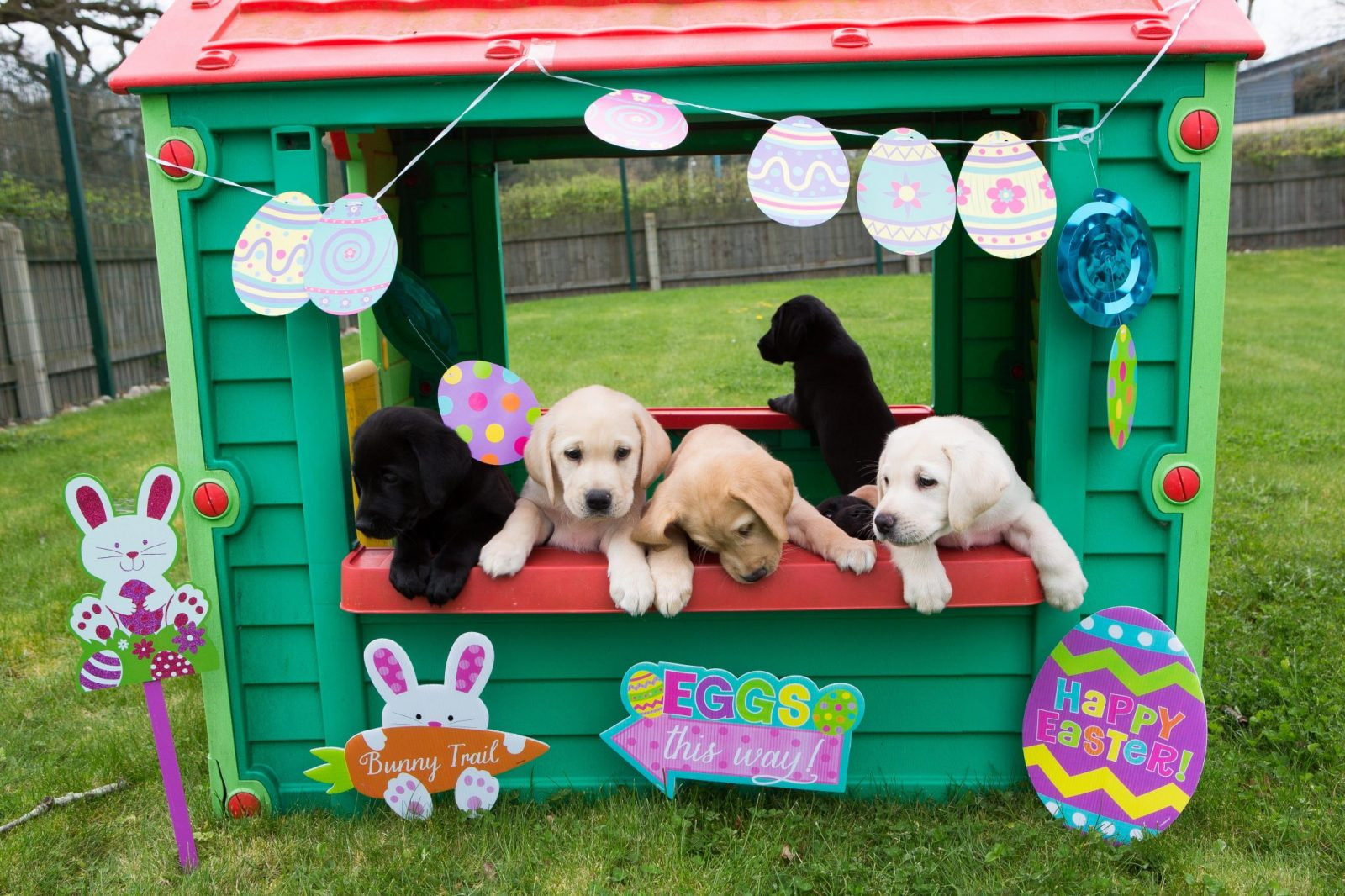 guide dogs at National Breeding Centre