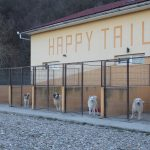 Romanian rescue centre
