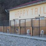 Romanian rescue centre