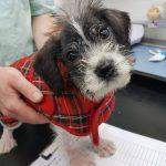 Puppy at Mayhew Animal Home