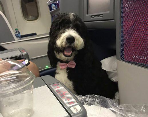 Dog on a flight