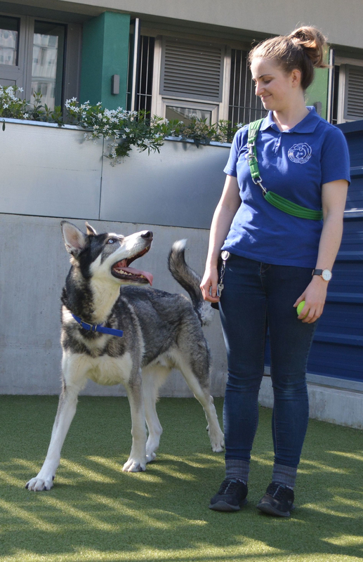 Loki at Battersea