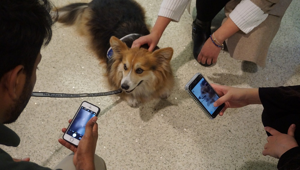 students taking dog pictures