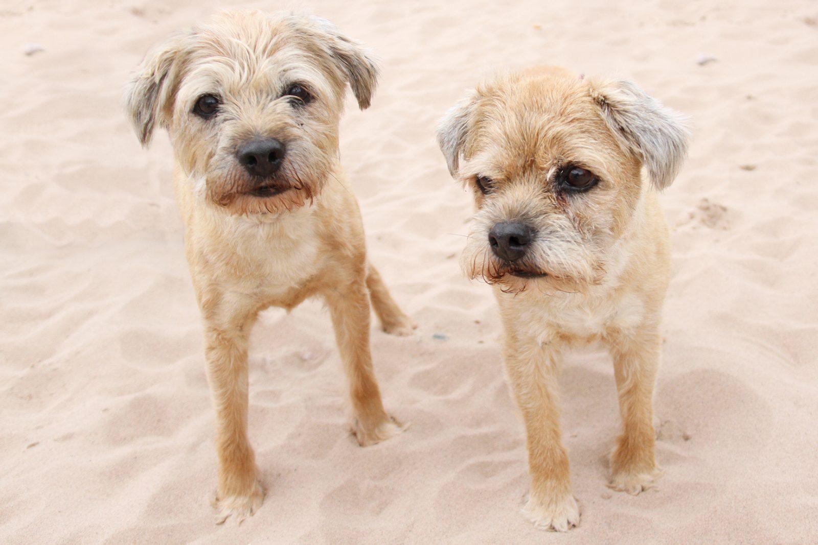 Dogs Trust Leeds Oldest Siblings Seek Retirement Home -4045
