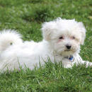 Parasite control for dogs