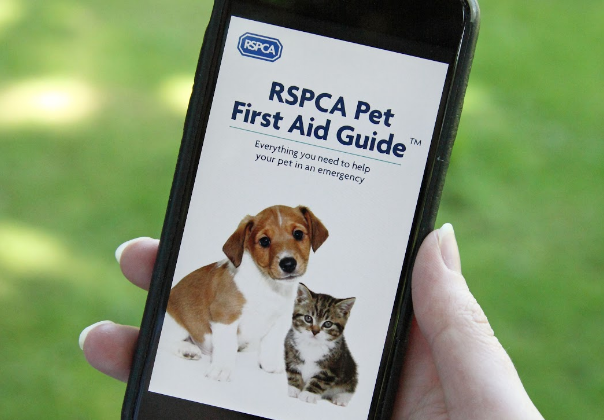 rspca pet first aid guide pdf
