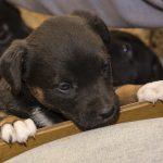 Puppy image 4