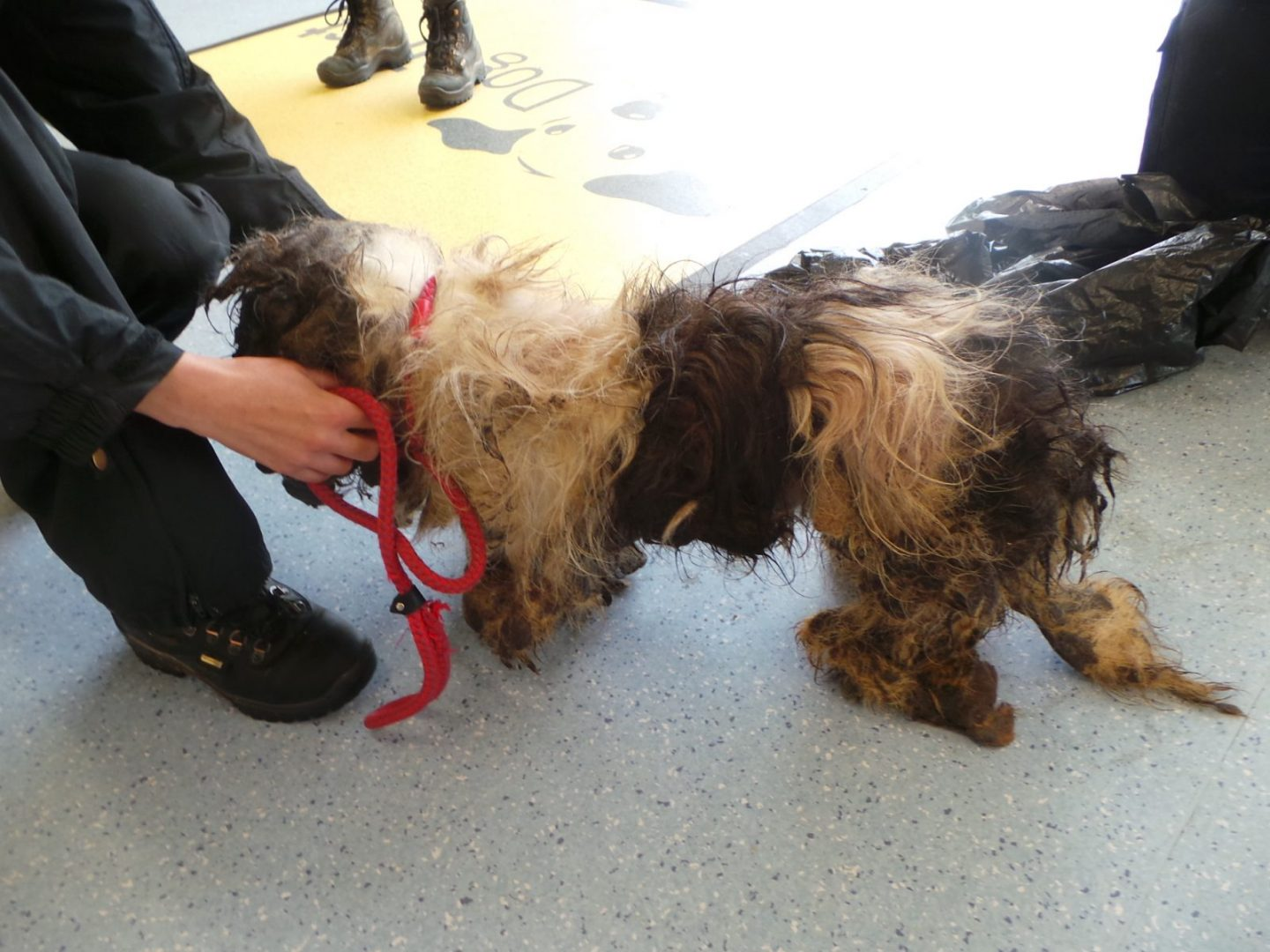 Ear Conditions In Dogs