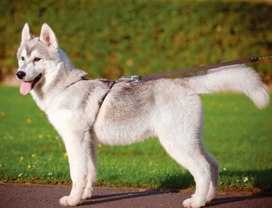 how to stop dog pulling on lead