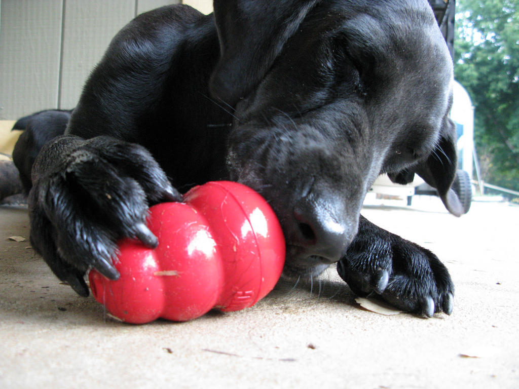 8 Interactive dog toys to keep your dog busy - Dogs Monthly | Dog Toys To Keep Them Busy