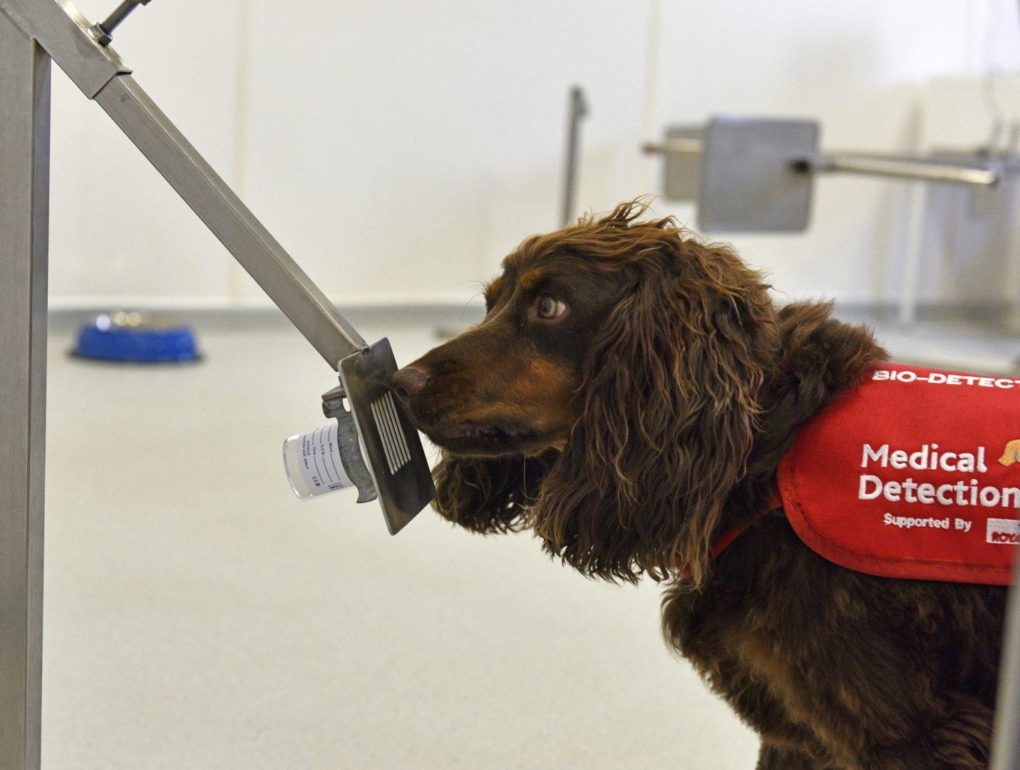 bladder cancer dogs