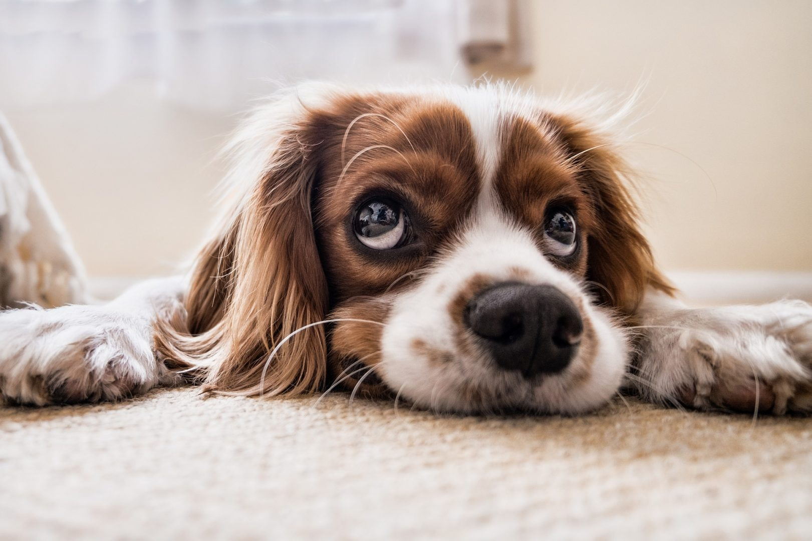 Can Dogs Suffer From Separation Anxiety