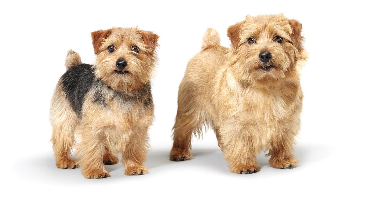 Rescue Dog Pembrokeshire