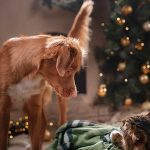 IAMS Christmas Dog and Cat