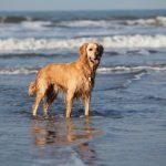 Dog Coast StKS 16