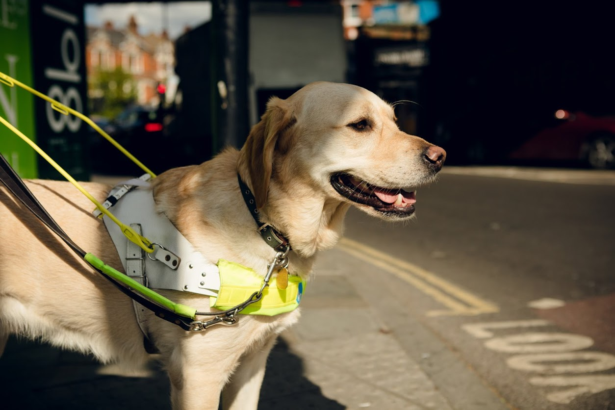 Dog Owners Urged To Take The Lead In New Campaign To