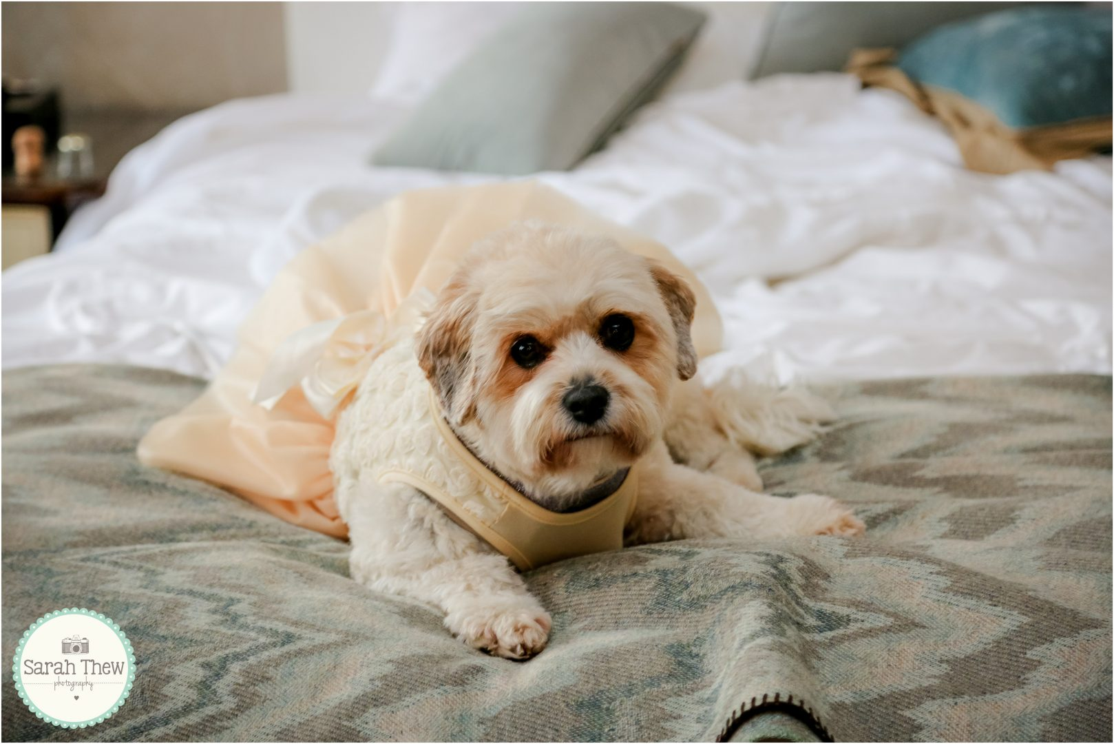 Hotel Lets Owners Bring Their Dogs To Their Big Day Dogs
