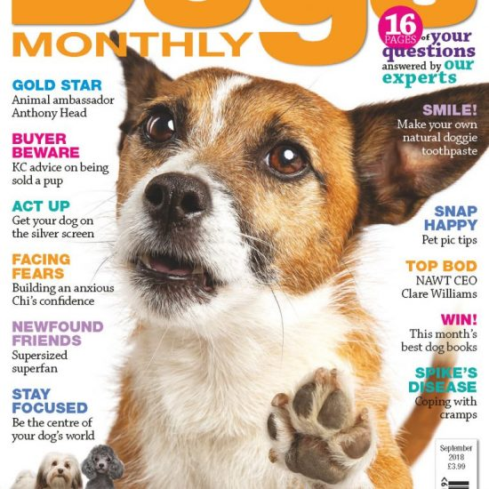 Dogs Monthly September 2018 Issue