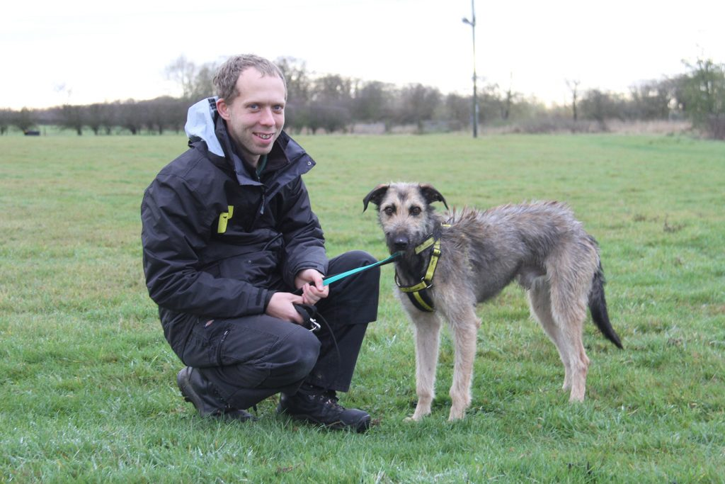 Scooby with dogs trust volunteer