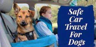 Safe car travel with dogs