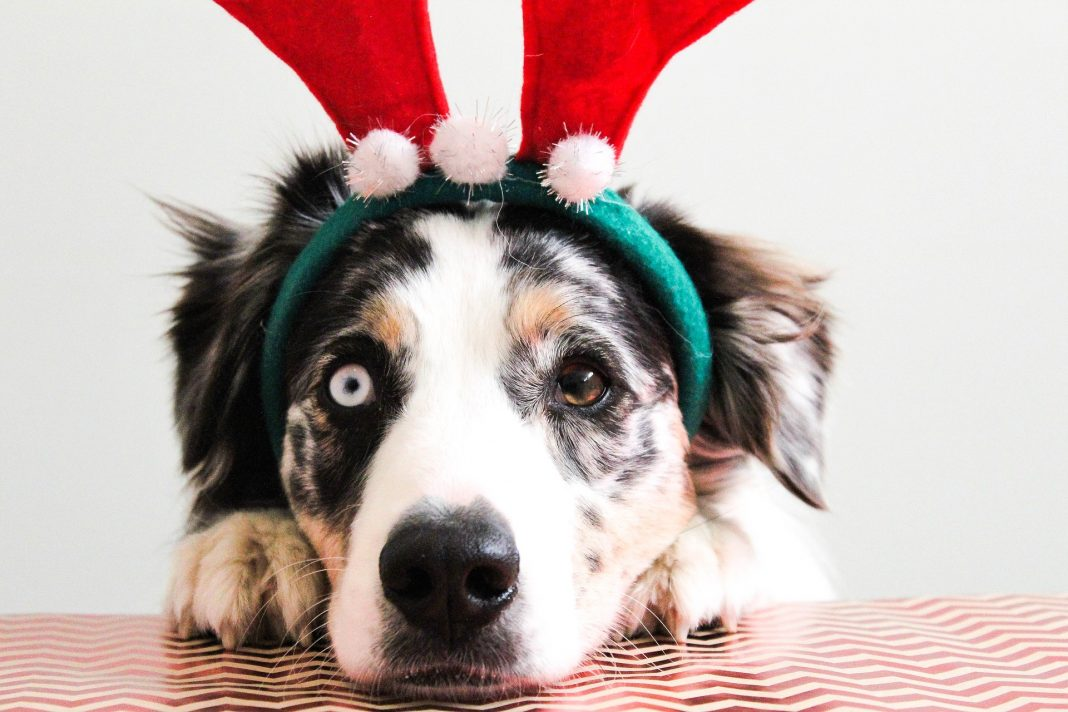 Dogs Trust Leeds Christmas Fair this weekend