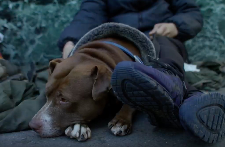 Homeless dog lying down