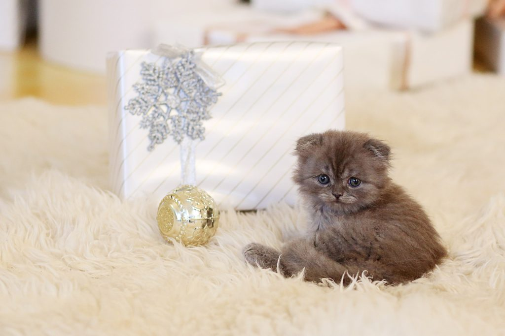 A kitten with a Christmas present