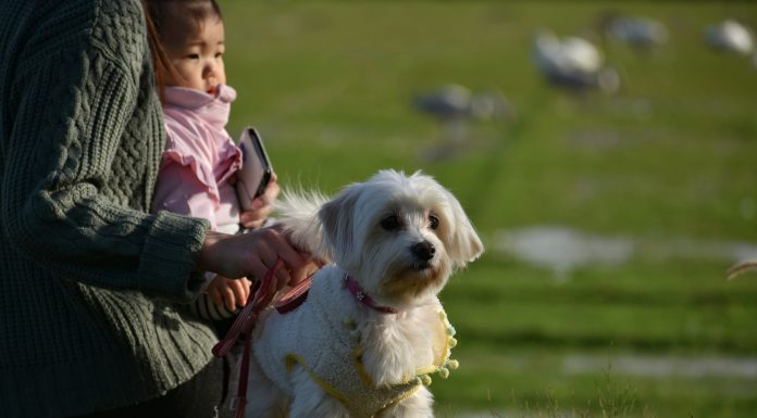 Dog with mother and child