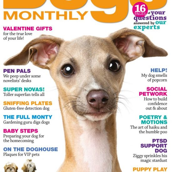 Dogs Monthly February 2019