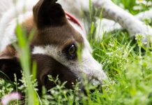 Dog laying in the grass