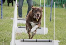 Dogs trust Leeds Fun day