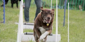 Dogs trust Leeds Fun day