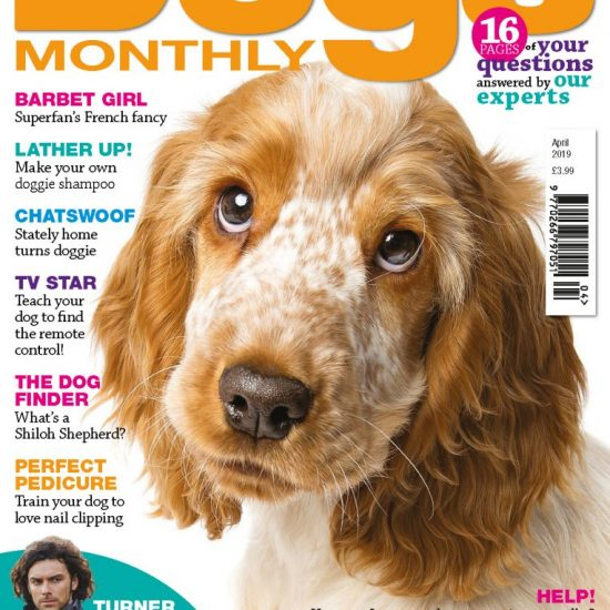 April issue of Dogs Monthly featuring WIllow the roan Cocker Spaniel
