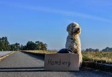 Hitch hiking dog