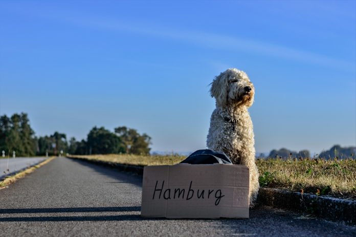Hitch hiking dog