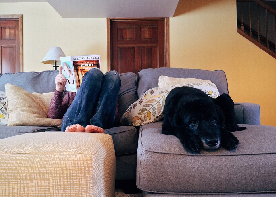 Dog on sofa, owner reading magazine