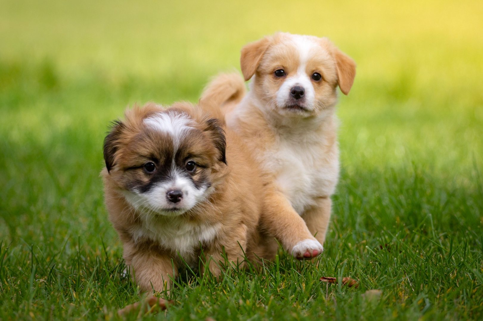 Puppies on grass