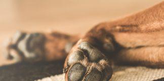 Dewclaw concern - dog paw