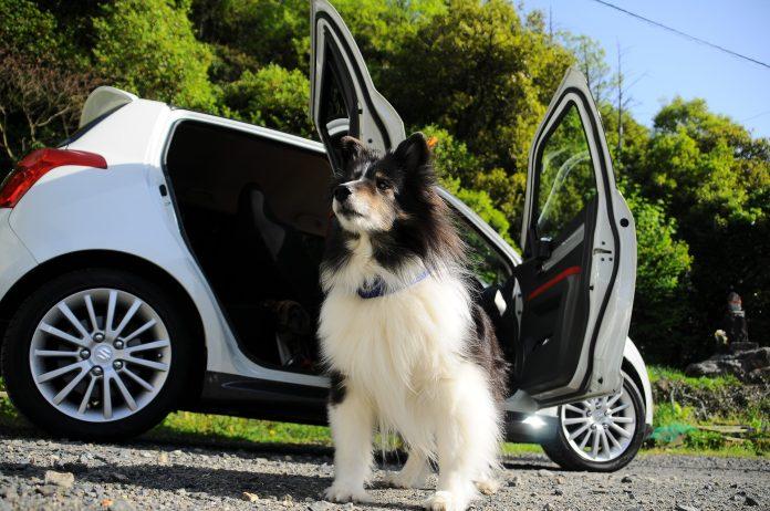 Dog outside car