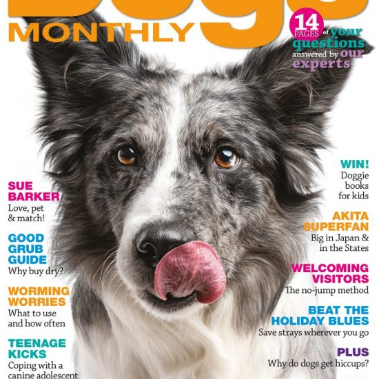June 2019 Dogs Monthly