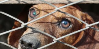 Dog behind wire fence