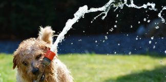 Dog with hose