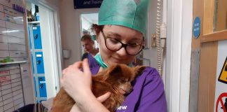 Coco with Mayhew vet