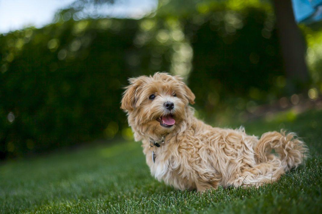 Dog in garden sun