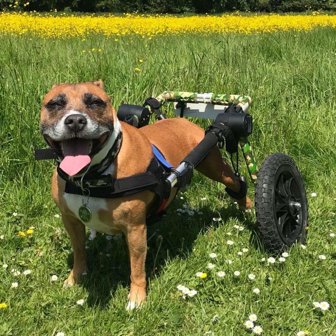 Winston using wheelchair