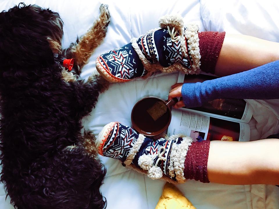 Book club dog